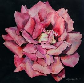 pinkrosews