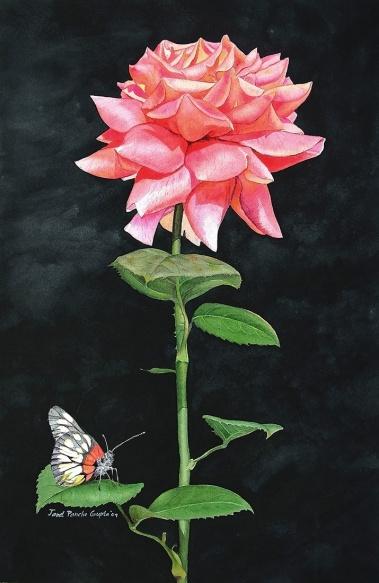 redrosebutterflyws
