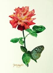 rosebluebutterly1ws