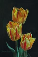 tulipsws